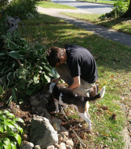 Adult children article, son working in the garden with the dog looking on