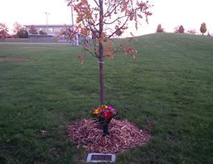 Losing a child to suicide, memorial tree